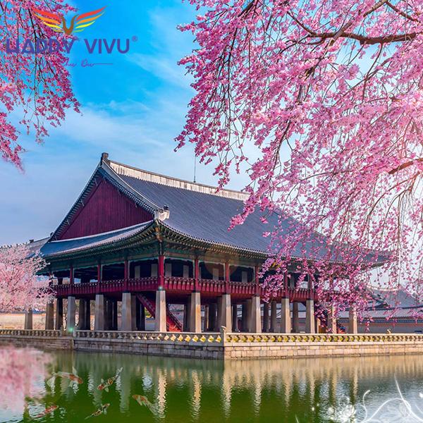 Tour Du Lịch Hàn Quốc Seoul - Nami Công Viên Hoa Anh Đào Yeouido